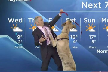 Weatherman vs Dog News Blooper video