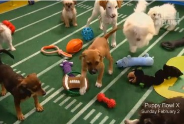 What Are You Most Excited About? Super Bowl ,Commercials, or Puppy Bowl? Poll